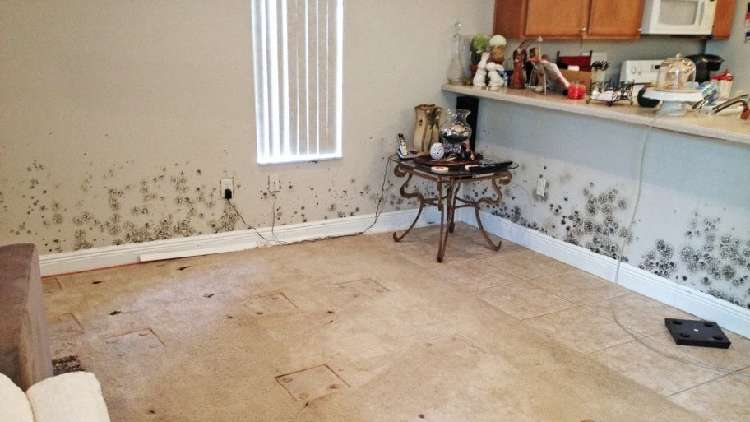 How To Remove Mold From Walls So You Don T Have Flee Your Home